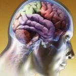 Este informe indica que el principal de los factores distintivos estaba presente en las personas involucradas en la función cerebral del lóbulo temporal. EEG puede distinguir los pacientes con Síndrome de Fatiga Crónica